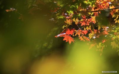autumn_leaves-content